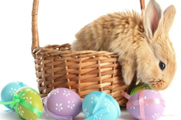 Mit hozzon a húsvéti nyuszi?