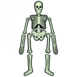 Emberi csontváz 4M Kreatív készletek 4M